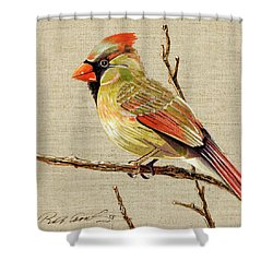 Female Cardinal Shower Curtain by Bob Coonts