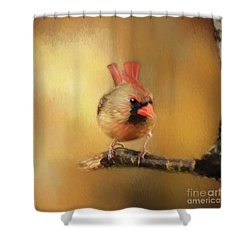 Shower Curtain featuring the photograph Female Cardinal Excited For Spring by Darren Fisher