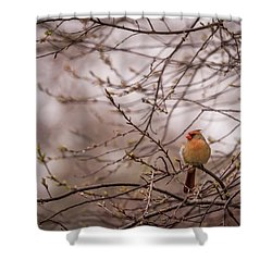 Shower Curtain featuring the photograph Female Cardinal In Spring 2017 by Terry DeLuco