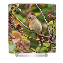Shower Curtain featuring the photograph Female Cardinal In The Berries by Kerri Farley