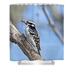 Shower Curtain featuring the photograph Female Downey Woodpecker 1104  by Michael Peychich