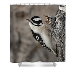 Female Downey Woodpecker Shower Curtain