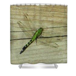 Female Eastern Pondhawk Dragonfly Shower Curtain