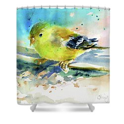 Female Goldfinch Shower Curtain by Christy Lemp