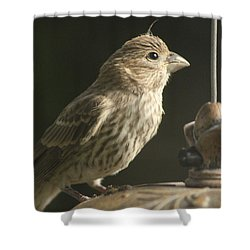 Female House Finch On Feeder Shower Curtain