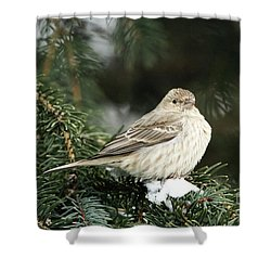 Female House Finch On Snow Shower Curtain