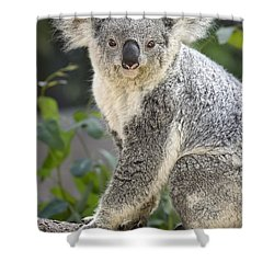 Female Koala Shower Curtain