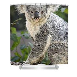 Female Koala Shower Curtain by Jamie Pham