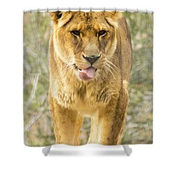 Shower Curtain featuring the photograph Female Lion by Ayasha Loya