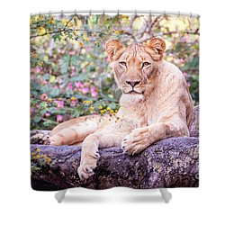 Female Lion Resting Shower Curtain by Stephanie Hayes