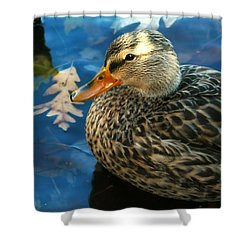 Female Mallard Duck In The Fox River Shower Curtain