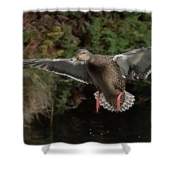 Female Mallard Shower Curtain