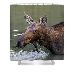 Shower Curtain featuring the photograph Female Moose Head by James BO Insogna