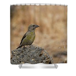 Female Red Crossbill Shower Curtain
