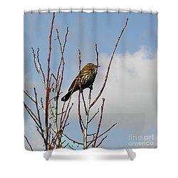 Female Red Winged Blackbird Shower Curtain