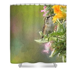 Female Rufous Hummingbird Shower Curtain