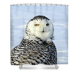 Female Snowy Owl Shower Curtain