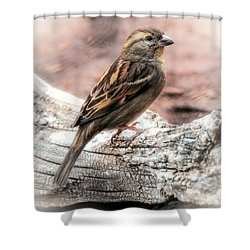 Female Sparrow Shower Curtain by Elaine Malott