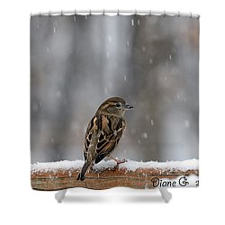 Female Sparrow In Snow Shower Curtain