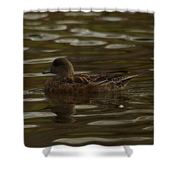 Shower Curtain featuring the photograph Female Wigeon by Jeff Swan