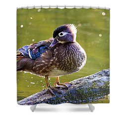 Female Wood Duck Shower Curtain by David Gn