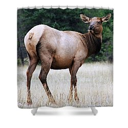 Feme Elk Shower Curtain by Tiffany Vest