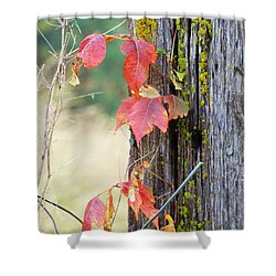 Shower Curtain featuring the photograph Fencing Ivy by J L Zarek