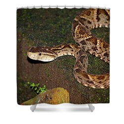 Shower Curtain featuring the photograph Fer-de-lance, Botherops Asper by Breck Bartholomew