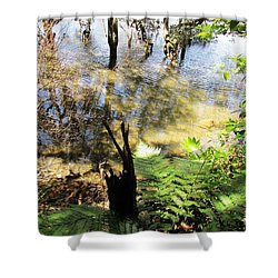 Fern Amidst The Mangroves Shower Curtain by Dianne  Connolly