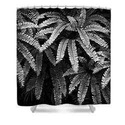 Fern And Shadow Shower Curtain