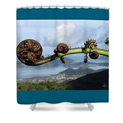 Fern Fiddlehead Shower Curtain