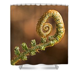 Fern Frond - 365-39 Shower Curtain by Inge Riis McDonald