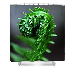 Fern Frond Shower Curtain
