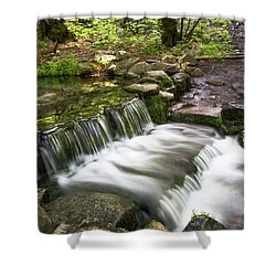 Fern Spring 4 Shower Curtain