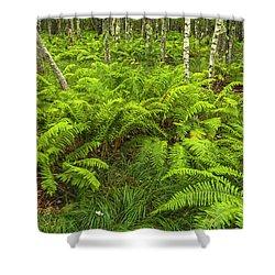 Ferns And Birch In Soft Light Shower Curtain