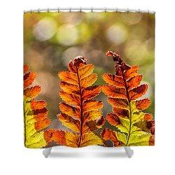 Ferns And Bokeh Forest Light Shower Curtain