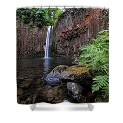 Ferns And Rocks By Abiqua Falls Shower Curtain by David Gn