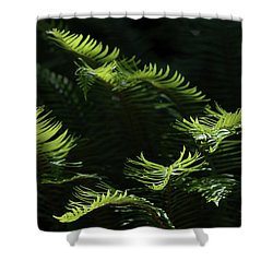 Ferns In The Forest Shower Curtain