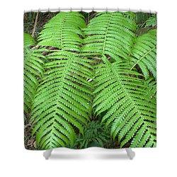Ferns Shower Curtain by Karen Nicholson