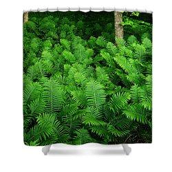 Ferns Shower Curtain by Michael Peychich