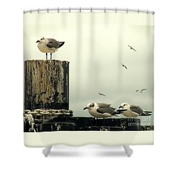 Ferry Hypnosis Shower Curtain