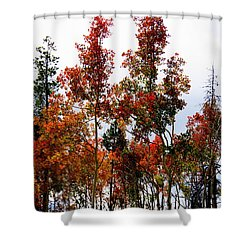 Shower Curtain featuring the photograph Festive Fall by Karen Shackles
