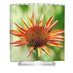 Shower Curtain featuring the photograph Fibonacci by David Chandler