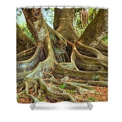 Ficus Roots Shower Curtain