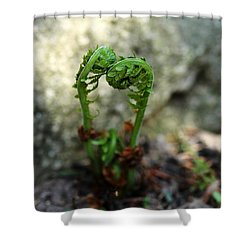 Fiddleheads Shower Curtain
