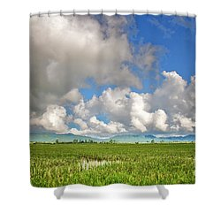 Shower Curtain featuring the photograph Field by Charuhas Images