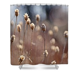 Field Of Dried Flowers In Earth Tones Shower Curtain