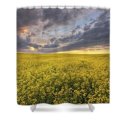Shower Curtain featuring the photograph Field Of Gold by Dan Jurak