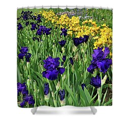 Field Of Iris Shower Curtain by Diane Lent