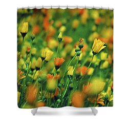 Field Of Orange And Yellow Daisies Shower Curtain